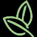 TS_leaves